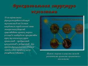 Функциональная структура экосистемы Для нормального функционирования всякой э