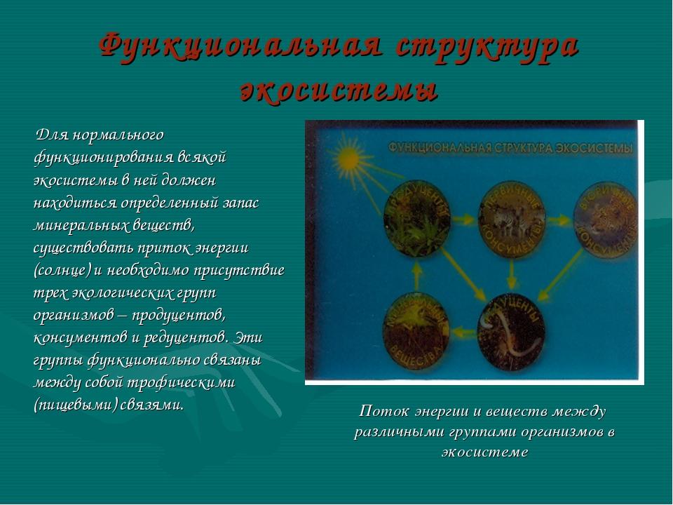 Функциональная структура экосистемы Для нормального функционирования всякой э...