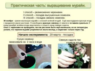 Начало эксперимента: 29 марта - посадка 30 ноября – купили маленькую мурайю с