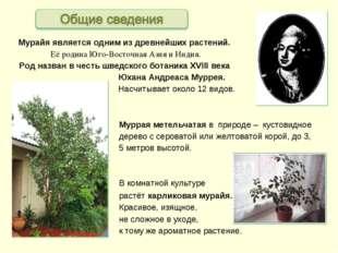 Мурайя является одним из древнейших растений. Её родина Юго-Восточная Азия и