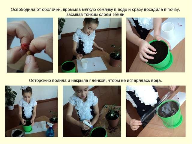 Освободила от оболочки, промыла мягкую семянку в воде и сразу посадила в почв...