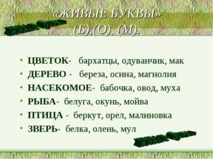 «ЖИВЫЕ БУКВЫ» (Б),(О), (М). ЦВЕТОК- бархатцы, одуванчик, мак ДЕРЕВО - береза,