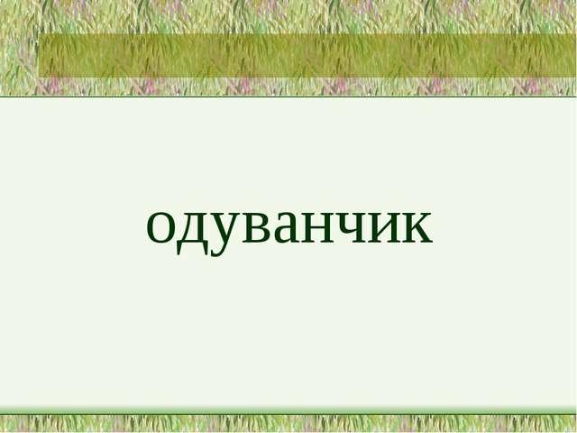 одуванчик