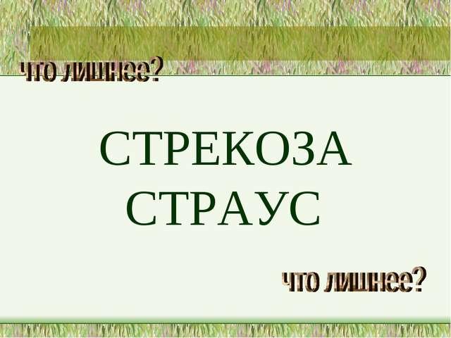 СТРЕКОЗА СТРАУС