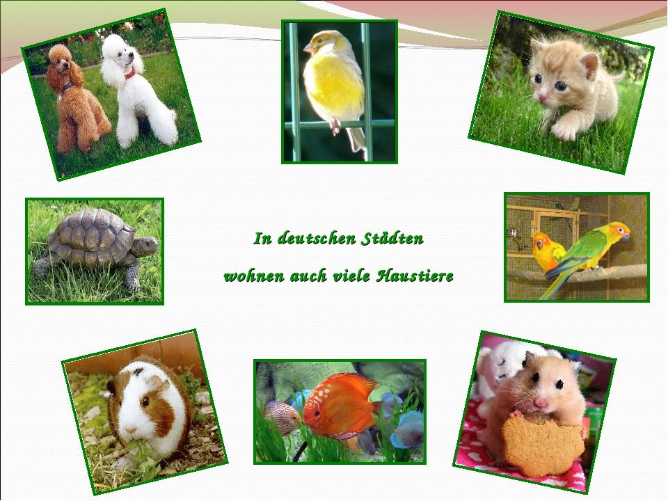 In deutschen Städten wohnen auch viele Haustiere