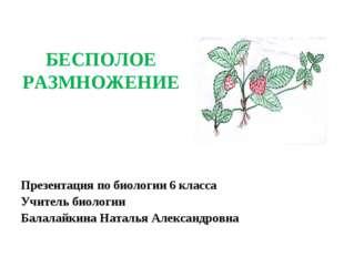 БЕСПОЛОЕ РАЗМНОЖЕНИЕ Презентация по биологии 6 класса Учитель биологии Балала