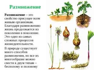 Размножение Размножение – это свойство присущее всем живым организмам. Благо