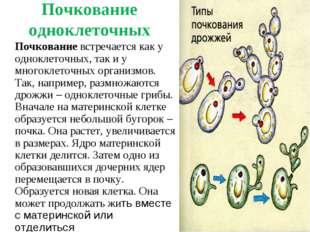 Почкование одноклеточных Почкование встречается как у одноклеточных, так и у