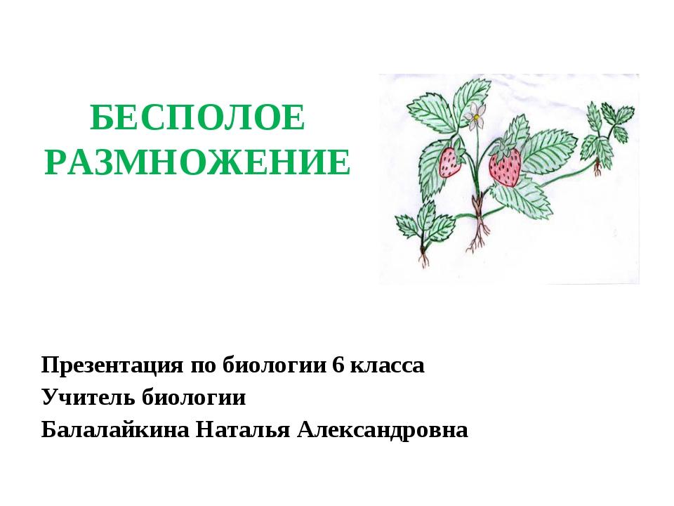 БЕСПОЛОЕ РАЗМНОЖЕНИЕ Презентация по биологии 6 класса Учитель биологии Балала...