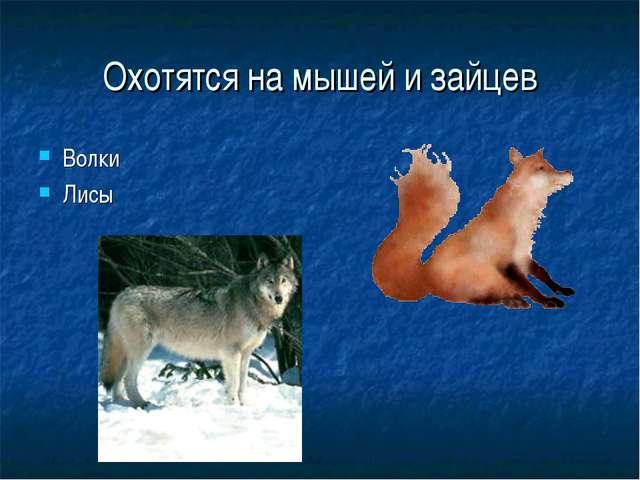 Охотятся на мышей и зайцев Волки Лисы