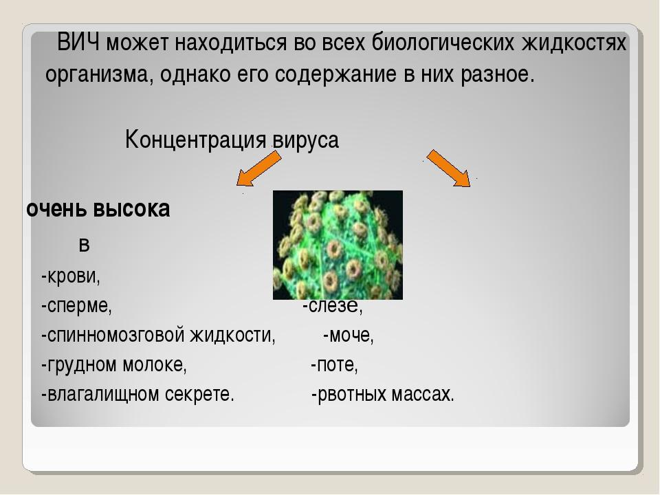 ВИЧ может находиться во всех биологических жидкостях организма, однако его с...
