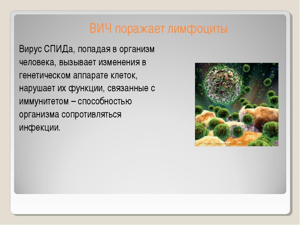 ВИЧ поражает лимфоциты Вирус СПИДа, попадая в организм человека, вызывает изм...