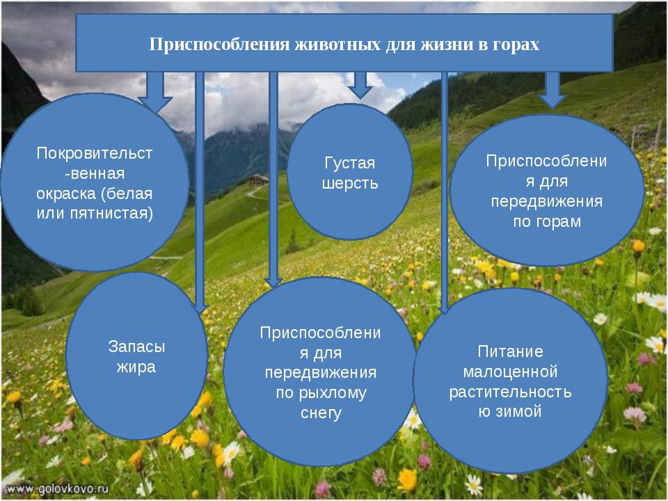 Приспособления животных для жизни в горах Покровительст-венная окраска (белая...