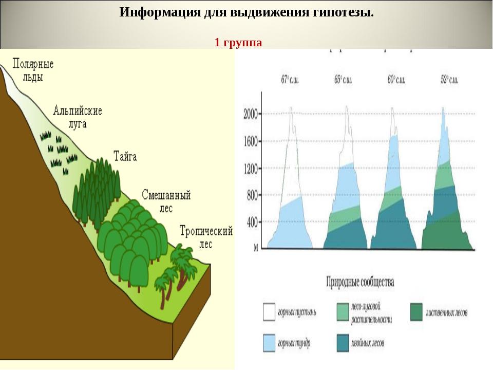 Информация для выдвижения гипотезы. 1 группа