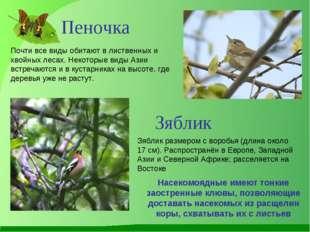 Почти все виды обитают в лиственных и хвойных лесах. Некоторые виды Азии встр