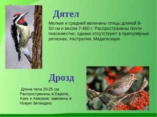 Мелкие и средней величины птицы длиной 8-50см и весом 7-450г. Распространен