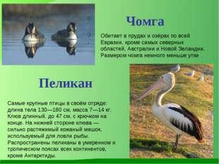 Обитает в прудах и озёрах по всей Евразии, кроме самых северных областей, Авс