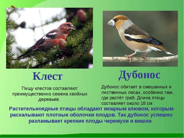 Дубонос обитает в смешанных и лиственных лесах, особенно там, где растёт граб...