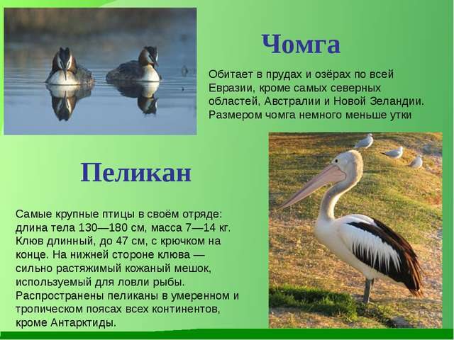Обитает в прудах и озёрах по всей Евразии, кроме самых северных областей, Авс...