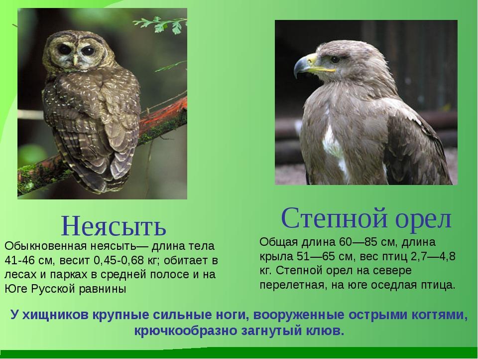 Степной орел Общая длина 60—85 см, длина крыла 51—65 см, вес птиц 2,7—4,8 кг....