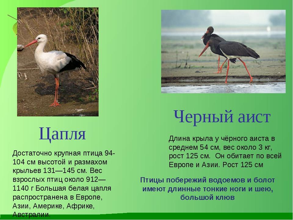 Длина крыла у чёрного аиста в среднем 54 см, вес около 3 кг, рост 125 см. Он...