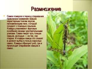 Размножение Самки комаров в период спаривания привлекают внимание самцов хара