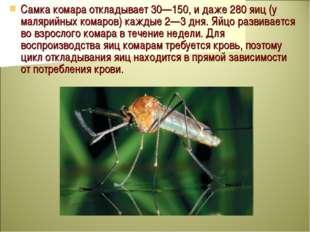 Самка комара откладывает 30—150, и даже 280 яиц (у малярийных комаров) каждые