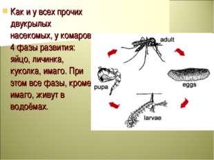 Как и у всех прочих двукрылых насекомых, у комаров 4 фазы развития: яйцо, лич