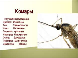 Комары Научная классификация Царство: Животные Тип: Членистоногие Класс: На
