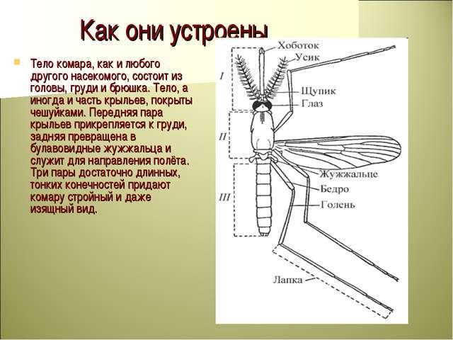 Как они устроены Тело комара, как и любого другого насекомого, состоит из гол...