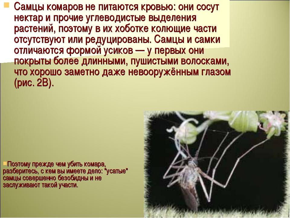 Самцы комаров не питаются кровью: они сосут нектар и прочие углеводистые выде...