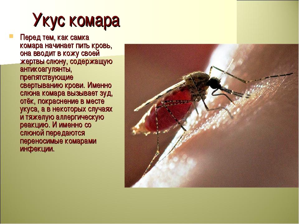Укус комара Перед тем, как самка комара начинает пить кровь, она вводит в кож...