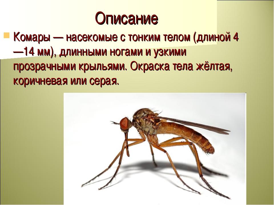 Описание Комары — насекомые с тонким телом (длиной 4—14 мм), длинными ногами...