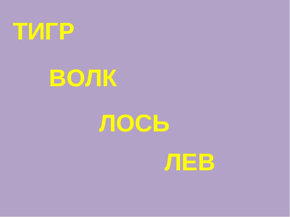 ТИГР ЛЕВ ЛОСЬ ВОЛК
