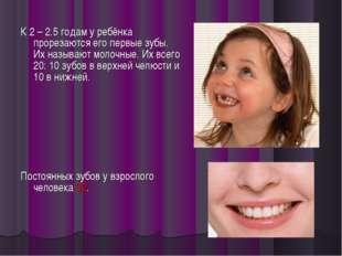 К 2 – 2.5 годам у ребёнка прорезаются его первые зубы. Их называют молочные.