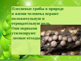 Плесневые грибы в природе и жизни человека играют положительную и отрицательн
