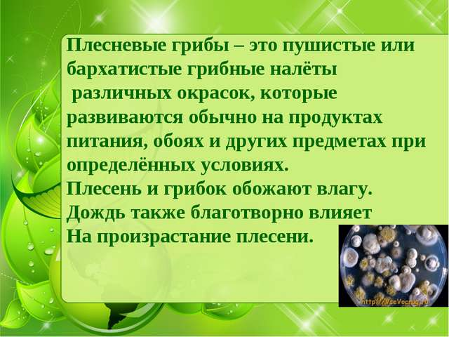 Плесневые грибы – это пушистые или бархатистые грибные налёты различных окрас...
