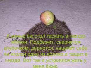 А ночью ёж стал таскать в гнездо яблоки. Подбежит, свернется клубочком, дёрне
