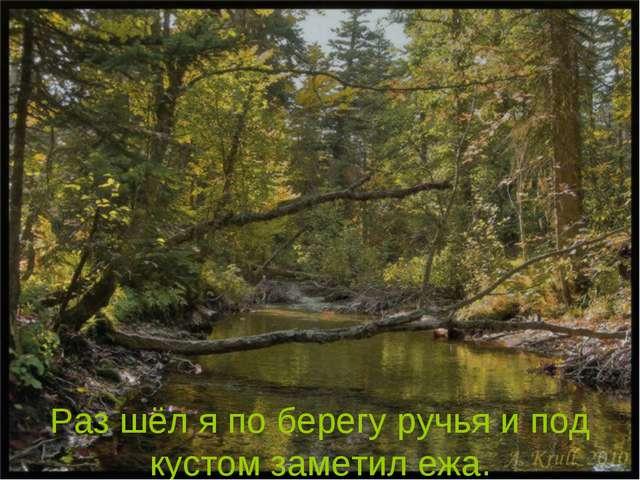Раз шёл я по берегу ручья и под кустом заметил ежа.