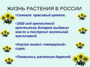 Сначала красивый цветок. 1830 год крепостной крестьянин Бокарев выдавил масло