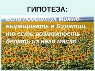 ГИПОТЕЗА: Если подсолнух можно выращивать в Бурятии, то есть возможность дела
