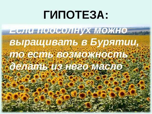 ГИПОТЕЗА: Если подсолнух можно выращивать в Бурятии, то есть возможность дела...