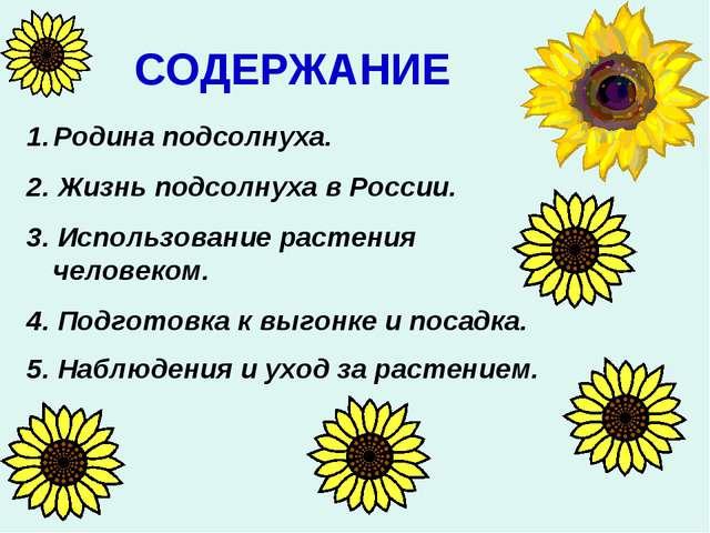 СОДЕРЖАНИЕ Родина подсолнуха. 2. Жизнь подсолнуха в России. 3. Использование...