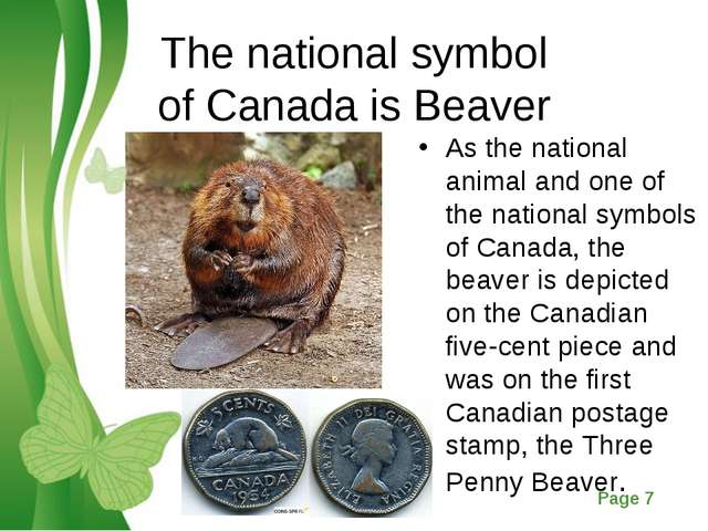 The national symbol of Canada is Beaver As the national animal and one of the...