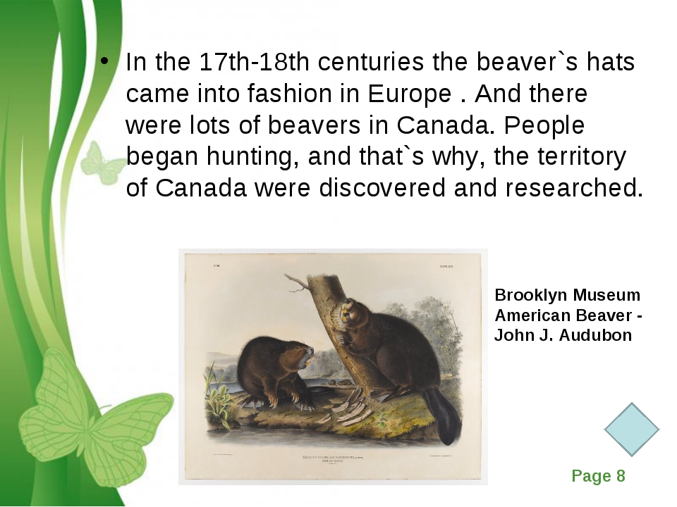 In the 17th-18th centuries the beaver`s hats came into fashion in Europe . An...