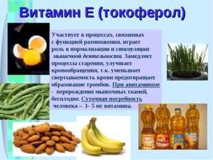Витамин Е (токоферол) Участвует в процессах, связанных с функцией размножения