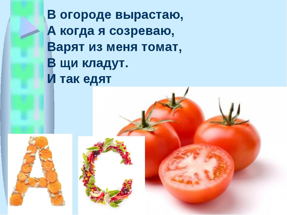 В огороде вырастаю, А когда я созреваю, Варят из меня томат, В щи кладут. И т...