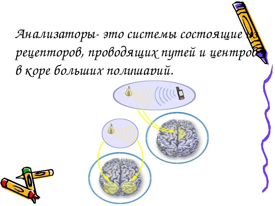 Анализаторы- это системы состоящие из рецепторов, проводящих путей и центров...