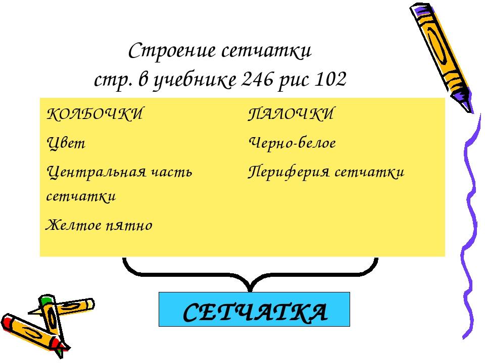 Строение сетчатки стр. в учебнике 246 рис 102 СЕТЧАТКА КОЛБОЧКИ Цвет Централь...