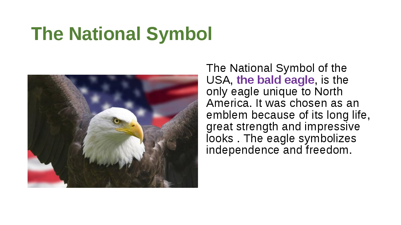 The National Symbol The National Symbol of the USA, the bald eagle, is the on...